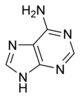 Adenine chemical structure.png