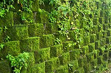 Taiwan 2009 JinGuaShi Historic Gold Mine Moss Covered Retaining Wall FRD 8940.jpg