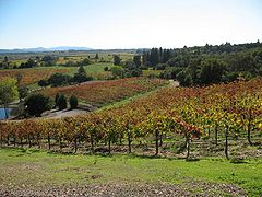 Armida Winery vineyards 0001.jpg